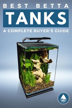 Did you know that bettas can jump several inches out of their water? To avoid the potential for death-by-dehydration or other problems, I've put together this primer on betta habitats. You'll learn which features to prioritize and how to choose the perfect betta tank for your needs.