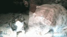 Stray cat sneaks into zoo enclosure and finds an unexpected friend