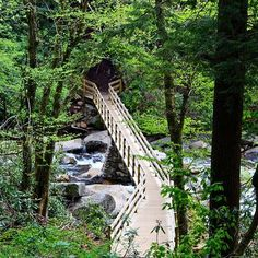 All trails lead to happiness here. #Gatlinburg