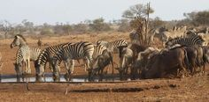 Photo: What did you see on your visit to the Kruger National Park? #SABucketList…