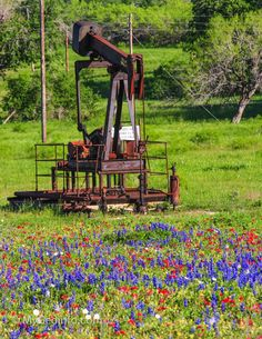 Old Texas oil well and bluebonnets.