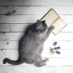 Paws and make time to read