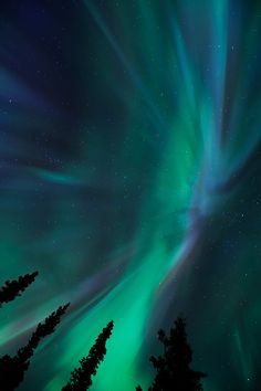 The Aurora Borealis is the most beautiful thing I've ever seen in my life. I'm dying to go back to Alaska and take Cristóbal with me.