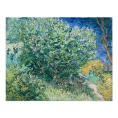 Lilac Bush (Lilacs) by Vincent Van Gogh Photo Print