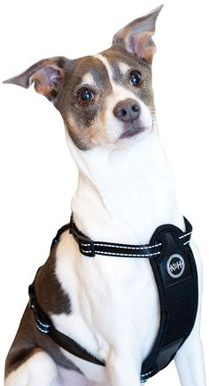 401 best Harnesses for dogs images on Pinterest | Dog harness, Dog