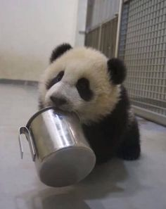 She was the first giant panda born in Taiwan, we called her Yuan Zai,Chinese name is 圓仔.