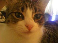 Katy Perrys kitty Twitpics