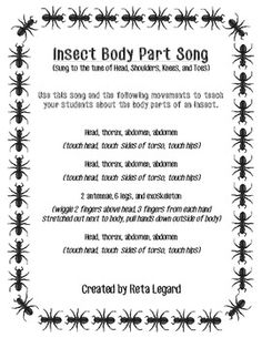 insect body parts