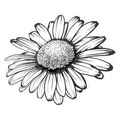 margaridas: bonito monocromático, preto e branco da flor da margarida isolada. para cartões e convites de casamento, aniversário, dia das mães e outras feriado sazonal