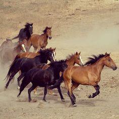 Our cousins.     Courtesy: American Wild Horses Preservation, AWHPC, Hillsborough, NC (USA).  (&donkeys!!!).