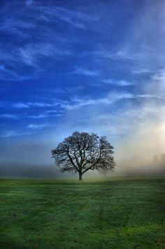Misty Tree in a Sandwich of Green and Blue - Camperdown Park Dundee, Scotland by idg.