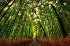 A wild bamboo forest in the outskirts of Kyoto...  from Trey Ratcliff at http://www.StuckInCustoms.com - all images Creative Commons Noncommercial