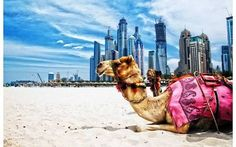 Image result for things to do in dubai