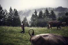 Eberle-Schmid Fotografie St.Gallen Mountains, Nature, Elevator, Naturaleza, Off Grid, Natural, Mother Nature, Bergen, Scenery