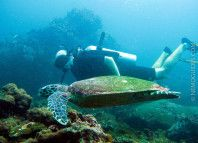 Liveaboard Diving Safaris in Thailand. + the only livingaboard for Snorkeling in the world!
