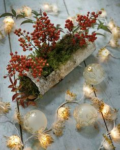 Grappoli rossi, rosa o bianchi: in giardino e sul balcone spuntano tante macchie vivaci. Se vuoi scaldare l'inverno, mettili anche in casa. Vedrai che effetto!