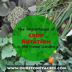 Crop Rotation in the home garden is an important principal that is often ignored. This post will teach you why garden crop rotation is so important!