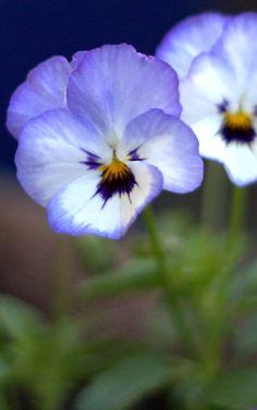 16 April: Flower