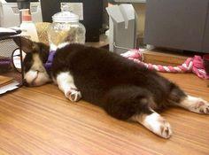 (ぐったり・・・)  I'm not sure what that mean, but think this pic is so cute, love all dogs!!!
