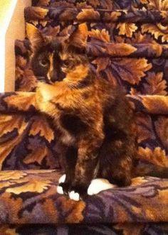 I'm camouflage cat.