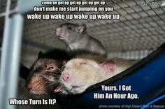 LOL. My older boys are going through this at the moment with Dexter and Oliver.