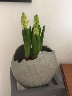 Kugel aus Beton selbst hergestellt - zur Zeit bepflanzt mit Hyazinthen - im Sommer werde ich sie wohl beleuchten :)
