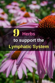 9 #Herbs to Support the #Lymphatic System - A healthy lymphatic system is very important to keep our bodies safe and free of illness.