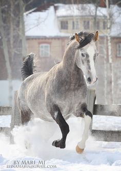 All sizes | Jazz galloping | Flickr - Photo Sharing!