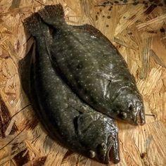 flounder fishing tips