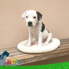 Buenos días 👍🏽  #PetsWorldMagazine #RevistaDeMascotas #Panama #Mascotas #MascotasPanama #MascotasPty #PetsMagazine #MascotasAdorables #Perros #PerrosPty #PerrosPanama #Pets #PetsLovers #Dogs #DogLovers #DogOfTheDay #PicOfTheDay #Cute #SuperTiernos