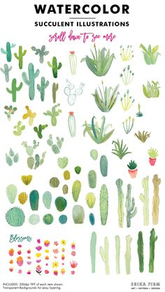 Watercolor Succulents and Cactus by Erika Firm on @creativemarket