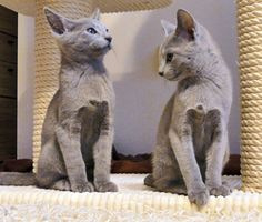 Three-month-old kittens. Courtesy love4my2cats|tumblr
