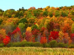 Northeast: New York : Best Fall Foliage in the US : TravelChannel.com