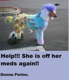 poodle off her meds again