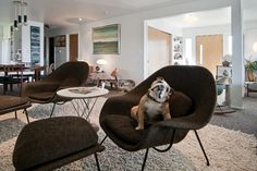 My Houzz: Ron - modern - living room - salt lake city - Lucy Call. my hubby needs the puppy.