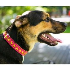 #peachykeenpets #Pokemon #pikachu #pikachudog #pikachucollar #martingale #pokemon #pokemoncollar #collar #dogcollar #dog #dogmodel #madeintoronto #pink #madeincanada #handmade #handcrafted #toronto