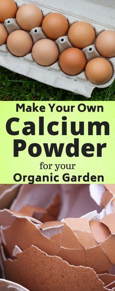 MAKE YOUR OWN CALCIUM POWDER. Curious what to do with your egg shells besides tossing into compost or trash? Learn how to make your own calcium powder using old egg shells. Perfect organic backyard garden.