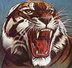 Tiger, Tier, Wild, Zoo, Natur