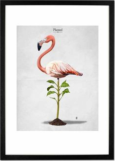 Planted by Rob Snow, 30 x 42cm (A3) Framed Print from Made.com. Multi-Coloured. We bet you've never seen a pink flamingo like this. Rob Snow is a cr..