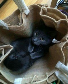 I thought the shopping bags were a bit heavy.