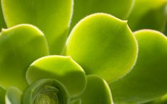 Breathtaking Windows Wallpapers Suresh Babu DJ 1024x768 7 Green 50