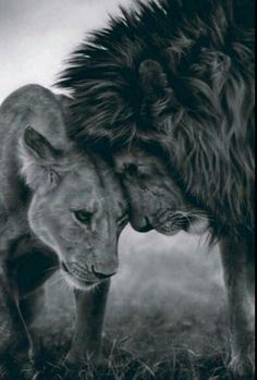 Every king needs his queen. Embedded image permalink