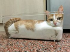 tastefullyoffensive:  Further proof that cats are liquid. (via jabbathechav)