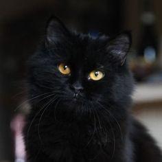 images de Cats-my love❤ sur We Heart It Orange Cats, White Cats, Black Cats, Orange And White Cat, Pretty Cats, Beautiful Cats, Pretty Kitty, Crazy Cat Lady, Crazy Cats