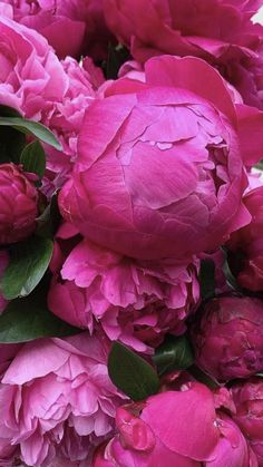 Most Beautiful Flowers, All Flowers, Summer Flowers, Pretty Flowers, Fresh Flowers, Peony Bouquet Wedding, White Wedding Flowers, Where To Buy Peonies, Peonies Delivery