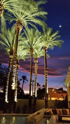 Beautiful morning here in Indian Wells California! Park Lighting, Tree Lighting, Outdoor Lighting, Indian Wells California, Landscape Architecture, Landscape Design, Palm Trees Landscaping, Bonsai Tree Types, Beautiful Morning