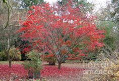 """""""Nature's Red"""" Photograph by Linda Prewer - Fine Art Prints, Canvas Prints, Cards for sale fineartamerica.com"""