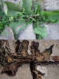 Guide to Treating Weeds in Your Garden Naturally