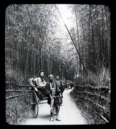 iamjapanese: de-salva: The Bamboo Alley of Old Kyoto (Japan, ca. 1898-1905) Thank you, D!