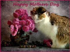 happy mother's day from the cat | Happy Mothers Day Cat - sweet, mothers day, cat, mom, flowers